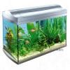 Aquarium en toebehoren